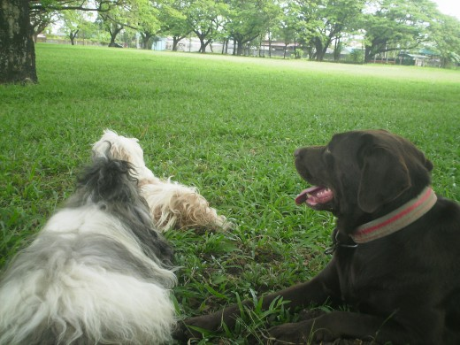 This place is my pet's paradise here on earth. The word 'park' and seeing their leash on my hand would cause such happy 'frenzy'.