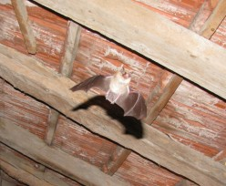 One of our acrobatic residents