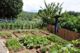 A small vegetable garden can save money on your grocery budget.