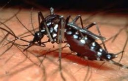 Dengue or bone breaking fever is due to bite of an infected aedes mosquito