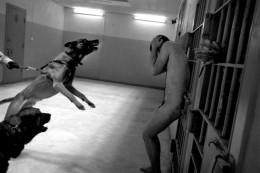 Torture Standard Operating Procedure Abu Ghraib Un-muzzled dogs were used to intimidate naked prisoners and one was inflicted with multiple bites.