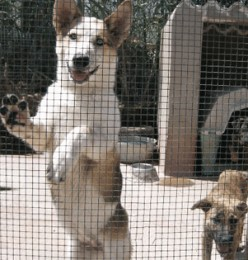 What Causes Diarrhea in Dogs When Boarding?