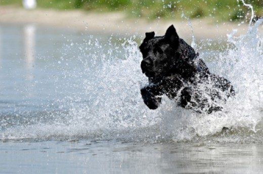 Our dogs lead active lives -- yet we want to protect them from the most common wounds.