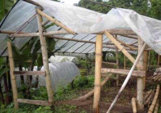 Organic Vegetables Farm