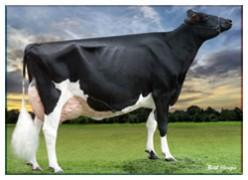 Organic Milk - benefits of milk.