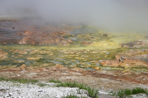 The yellow coloring in the water at the Midway Geyser Basin in Yellowstone National Park is caused by archaebacteria.