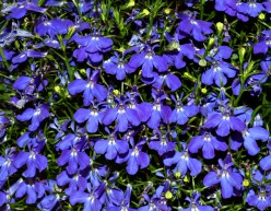 Annual Plants Add Constant Color To Your Backyard Garden