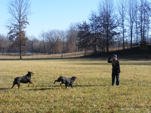 Training positively will change the bond with your dogs for the better! All rights reserved
