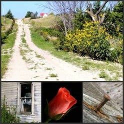 A ROSE AND A NAIL - The Road Back Home