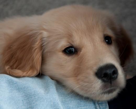 I'm a cutie too!