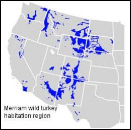 The Merriam wild turkey Regional Habitat