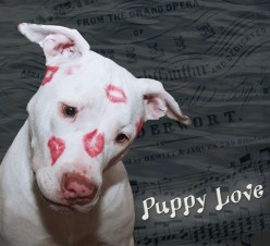Cute Puppy Pictures ~ National Puppy Day ~ Puppy Love ~ Things to Consider When Getting a Puppy