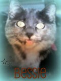 This is my cat Bessie on Muzy.com