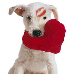 How do you show your pet some love?