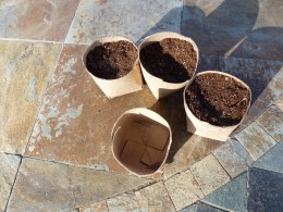 Fill with potting mix and moisten before adding the seed.