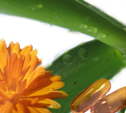 remedies include calendula, vitamin E, and Aloe pictured here.