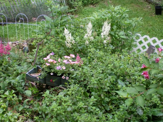 Astilbes, Petunias and Lemon Balm