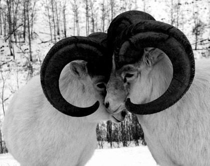 An Aries-Aries match can be sweet & productive or a match made in Hell. Take your chances!