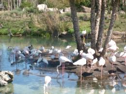 We pass a flock of flamingos.