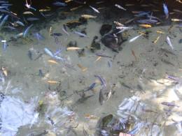 So many fish.