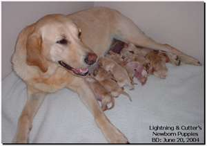 With this many new mouths to feed, the weakest pups will need to be monitored to make sure they are eating enough