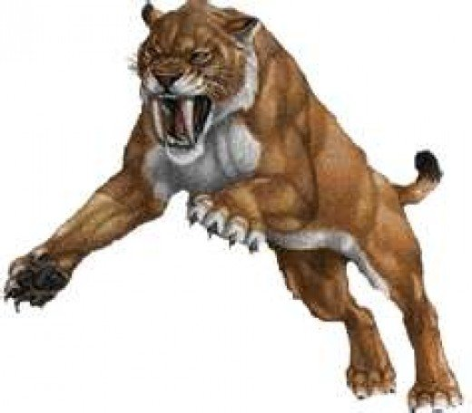Real Life Saber Tooth Tiger The Fierce Saber Tooth Tiger