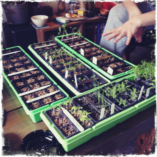Propogate your own seeds to save money