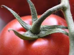 What tomato varieties are best for cool climates?