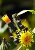Find Nature's Treasures Hidden in Plain Sight