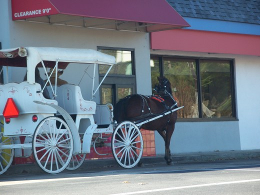 Horse Carriage Ride at Fast Food Restaurant