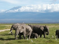 Amboseli National Park: A Kenyan Safari Adventure