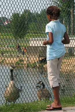 Young Girl Feeds Geese
