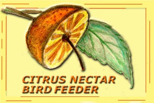 Grandpa's Orange Nectar Bird Feeder