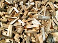 Biomass Energy: Plausible Plant Power or Biofuel Boondoggle?