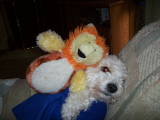 Daisy with her first toy, her Lion.