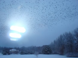 A flock of souls