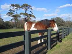 What are 10 traits that Clydesdale horses have in common?