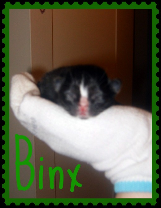 This is the kitten my sister had.  She named him Binx after the cat on the movie Hocus Pocus.