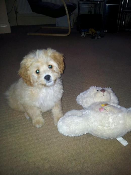Charlie and his Bear