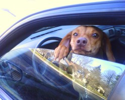 "LOVE YOU PETS WHEN THE CAR IS STOPPED. AND ALWAYS LEAVE A CRACK IN THE WINDOW FOR ""FIDO"" TO BREATHE."