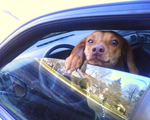 """LOVE YOU PETS WHEN THE CAR IS STOPPED. AND ALWAYS LEAVE A CRACK IN THE WINDOW FOR """"FIDO"""" TO BREATHE."""