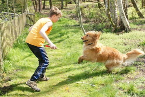 It's so much fun when you have a dog!  Games, physical activities and good mood are all included.