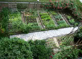 The growing season. Fine and healthy organic vegetables.