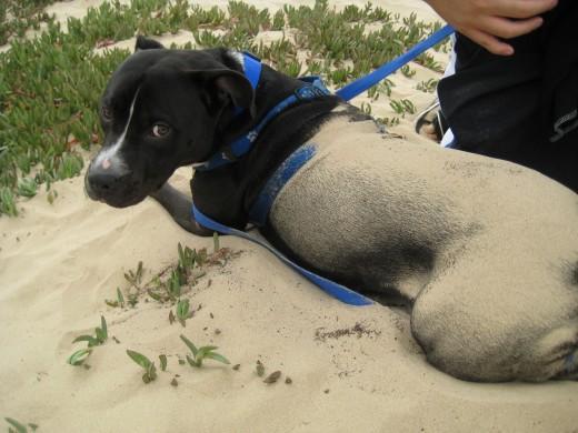 """""""Do I look like a sandcastle to you?"""""""