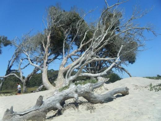 Best Atv Rental Pismo Beach