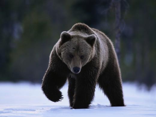Not a Polar Bear!!