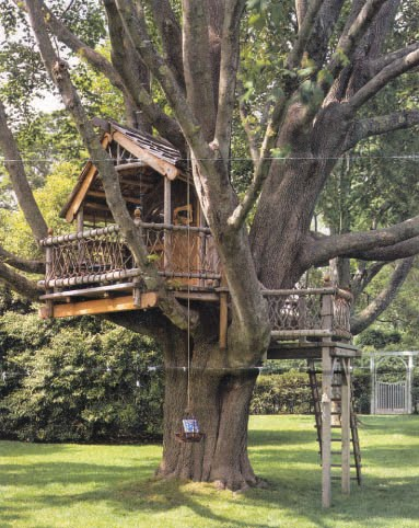 A Tree House with a Spectacular View!