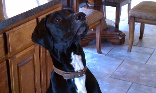 Hank loves the idea of planning dates around helping animals.