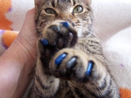 """The """"Caticure"""""""