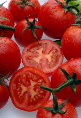 Growing Organic Tomatoes